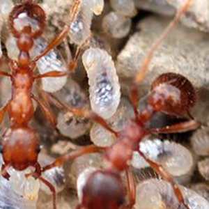 bug control 24-7 Emergency Pest Services