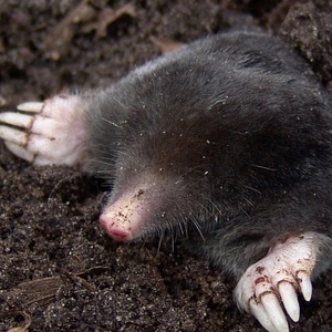 mole extermination Hackney