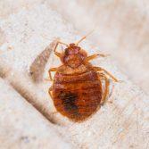 bedroom Pest Control