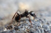 ants and ants nest