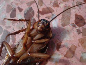 cockroach control london