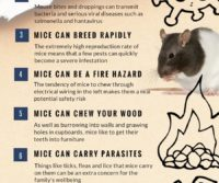reasons to get rid of mice infographic