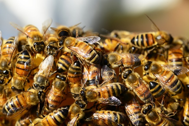 Colony of London bees swarming