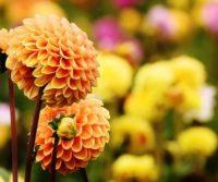 flower in a london garden