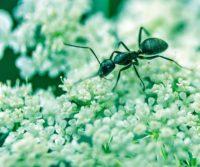 ant in a london garden