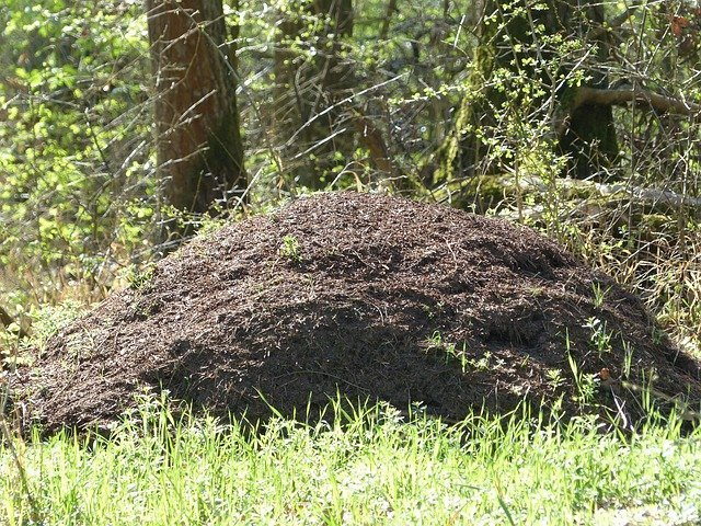 getting rid of an ant infestation