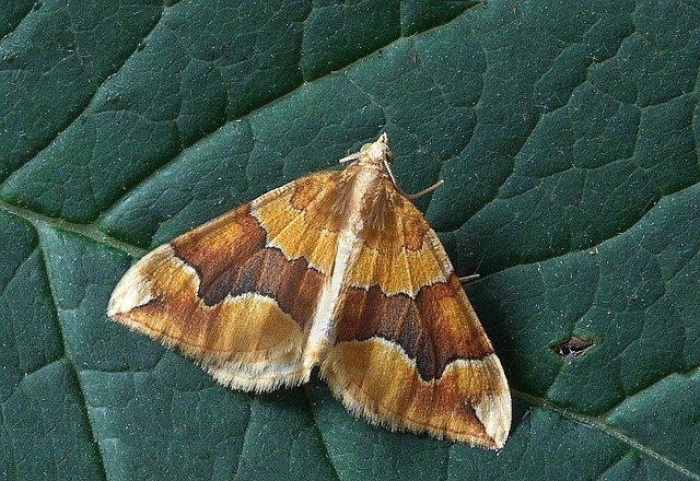pest-control-for-moths
