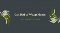 Get-Rid-of-Wasp-Nests