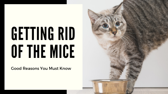 Getting-Rid-Of-the-Mice