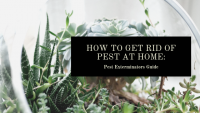 how-to-get-rid-of-pest