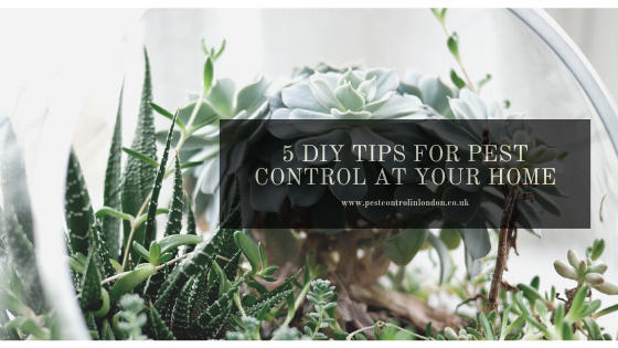 5 DIY Tips For Pest Control At Your Home