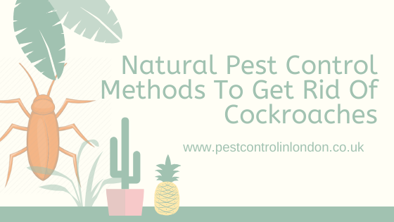Natural Pest Control Methods To Get Rid Of Cockroaches