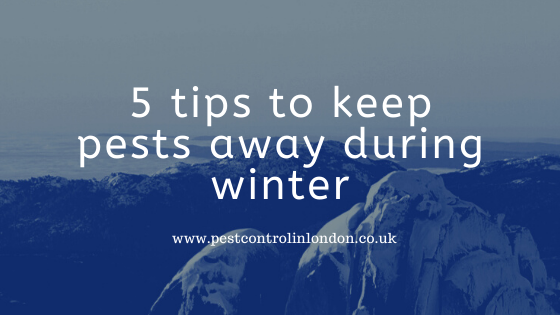 5 tips to keep pests away during winter