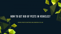 How to Get rid of Pests in vehicles_