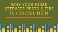 Why your home attracts pests & tips to control them