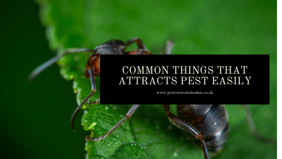 how pest gets attracted