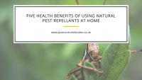 Five health benefits of using natural pest repellants at home