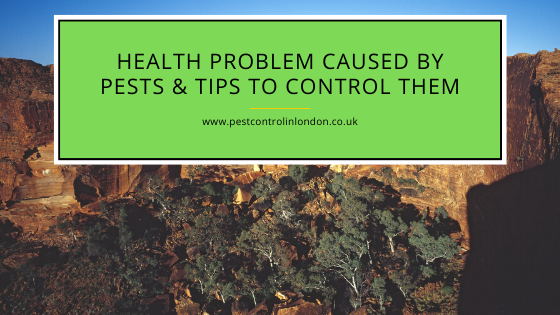 Health problem caused by Pests & Tips to control them