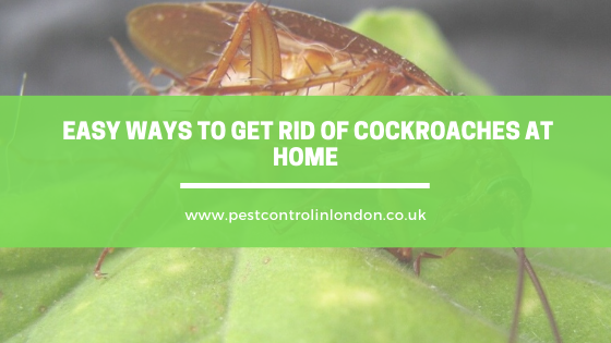 how to get rid of cockroaches