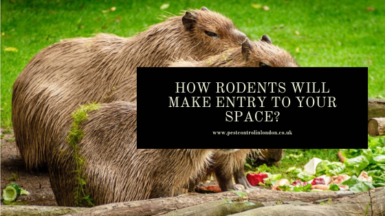 How Rodents will make entry to your space_