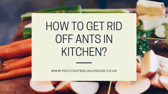 How to get rid off ants in Kitchen_
