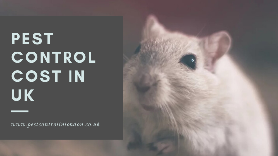 Pest Control Cost in UK
