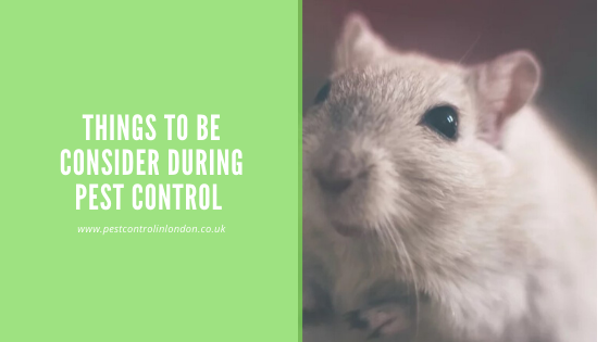 Things to be consider during Pest Control