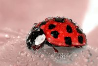 carpet Bugs in home