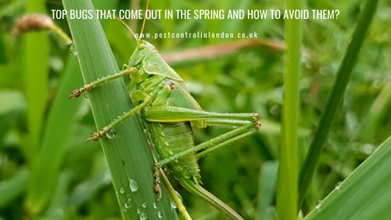 Top Bugs That Come Out in the Spring and How to Avoid Them?