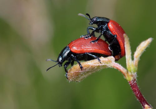 Top Bugs That Come Out in the Spring