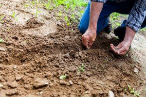 pest control in farm