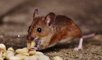 Know about Restaurant Pests in London