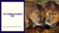 Tips to terminate the Rodents Entry