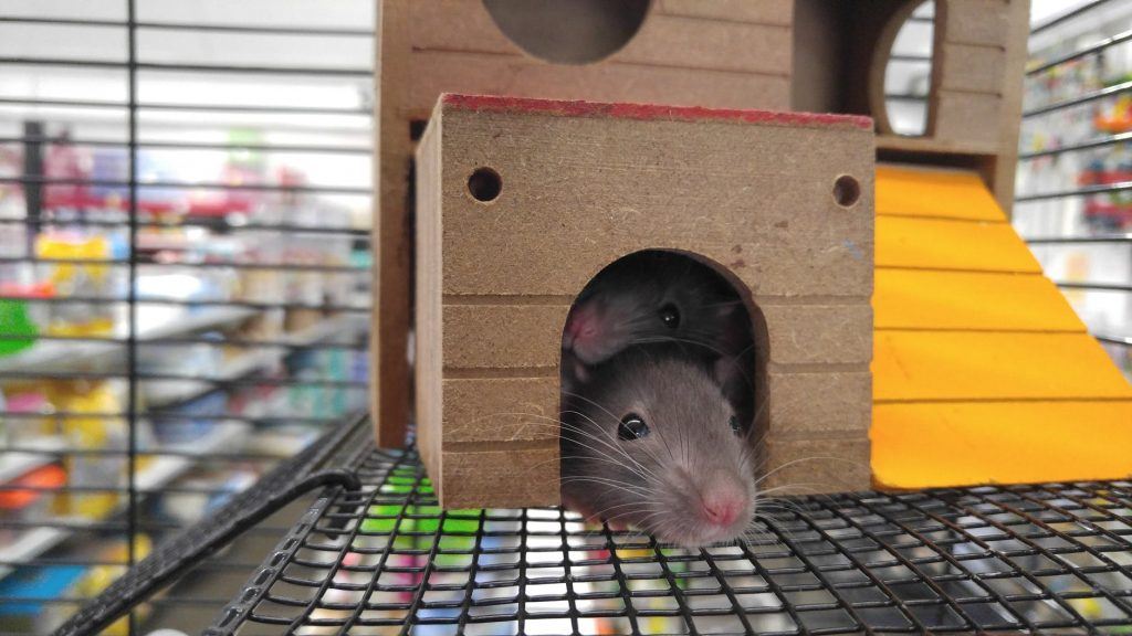 Terminate the Rodents