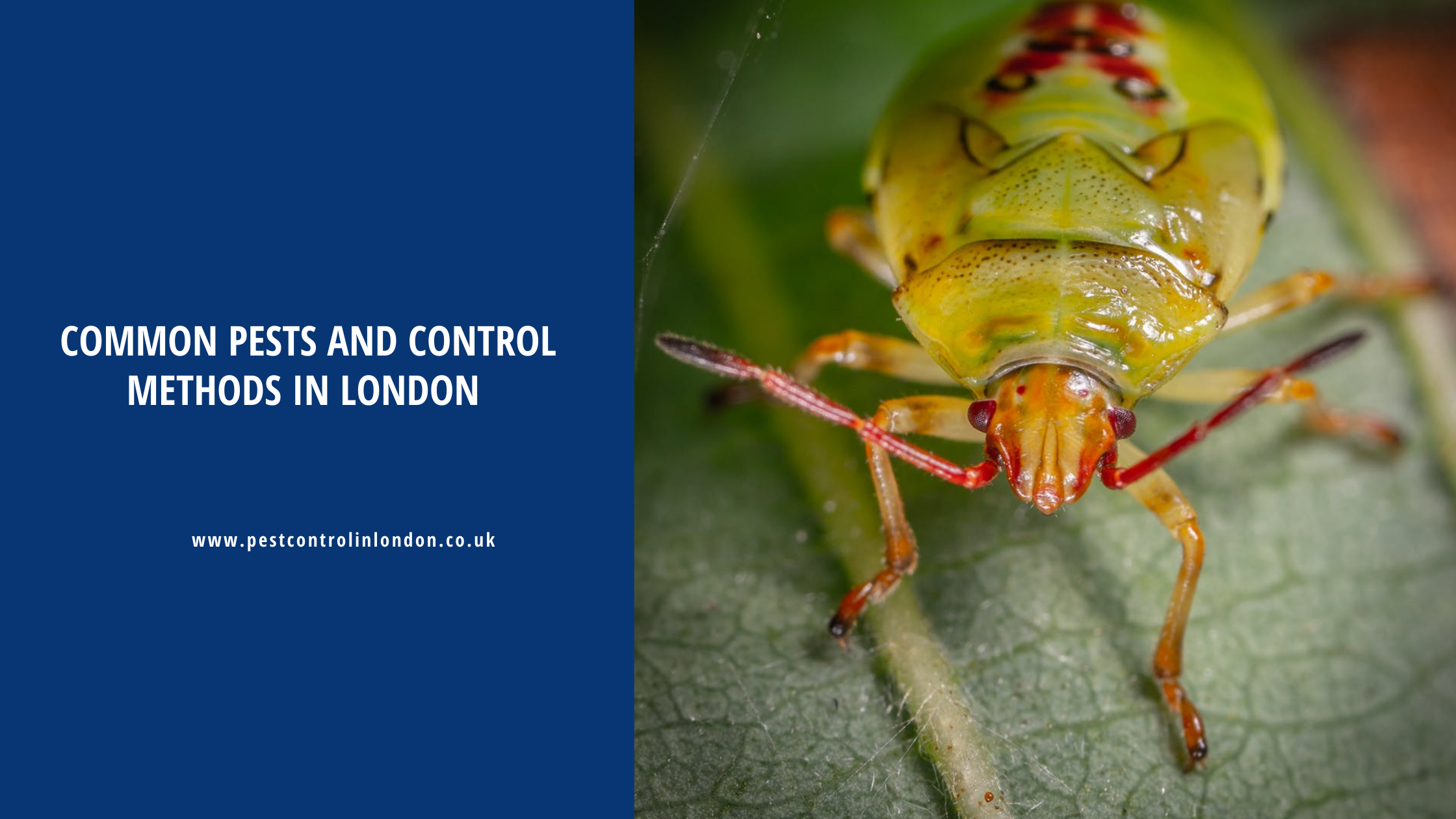 Common Pests and control Methods in London