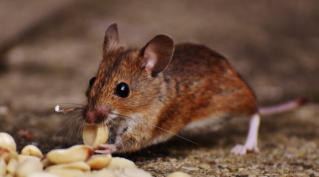 Keep away the mice from the food storage