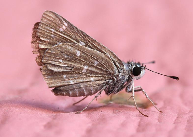 Moths control in London