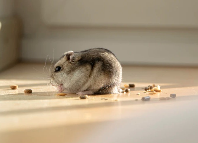 Common Signs of Pest Infestations