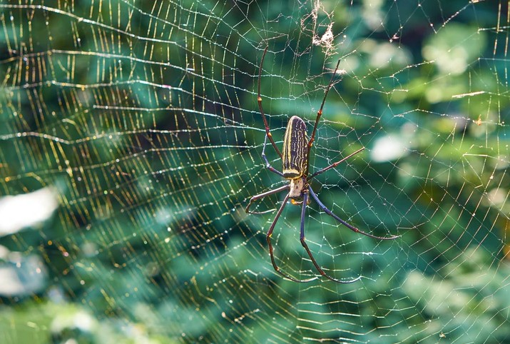 Hacks to get rid of spiders