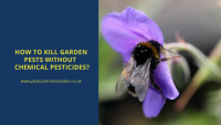 How to kill Garden Pest without Chemical Pesticides_