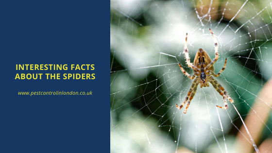 Interesting facts about the spiders