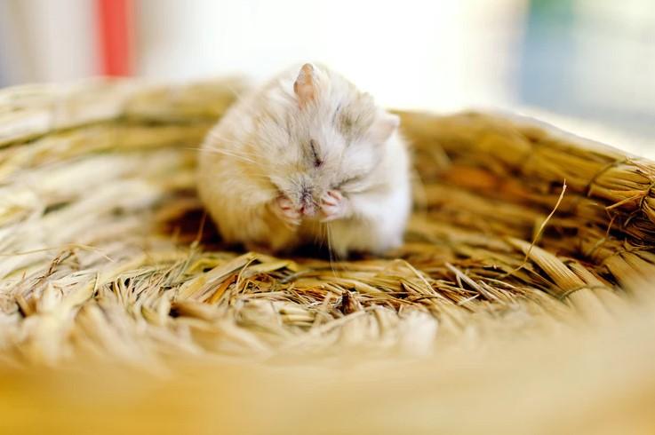 Mice control Method