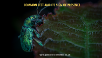 Pest and its sign of presence