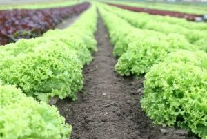 Pros and Cons of using Pesticide in agricultural farm