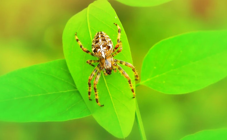 Things to know about spider