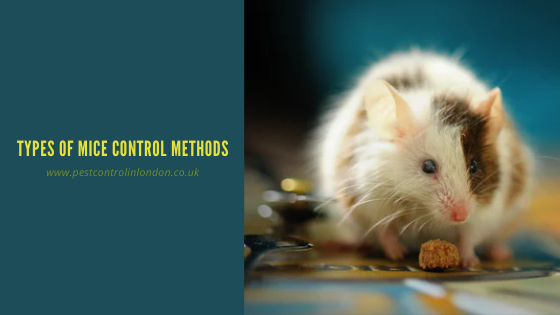 Types of Mice control Methods