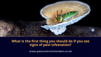 What is the first thing you should do if you see signs of pest infestation_