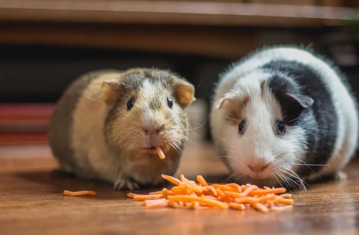mice extermination