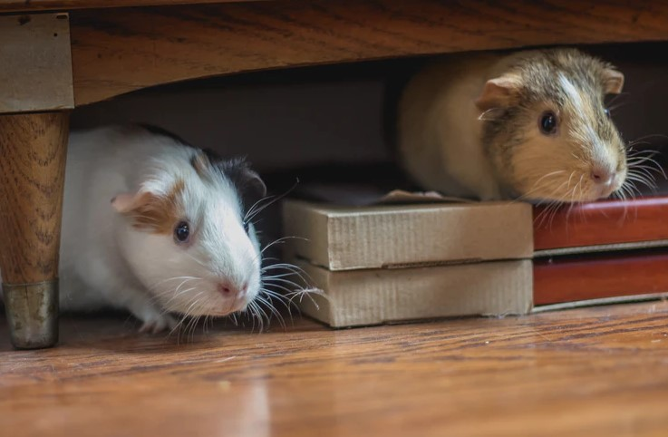sign of mice presence