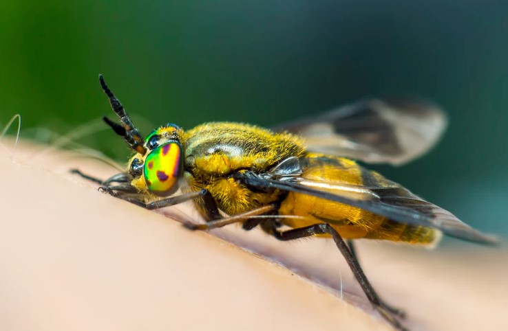 what are signs of pest infestation